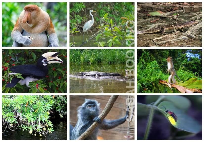 Pilajau Wildlife