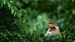 4D3N Nature Wildlife + Island Package
