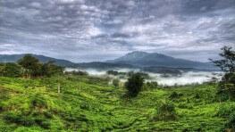 2D1N Sabah Tea Garden and Kundasang