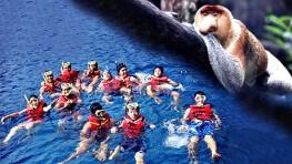 美人鱼岛浮潜 + 卡哇卡哇红树林船游