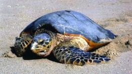 西靈岸海龜島