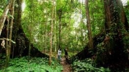 Gaya Island Jungle Trekking