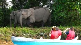 3D2N Wildlife Tourism Kinabatangan