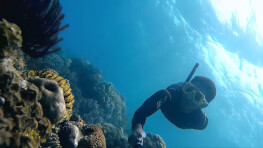 马布及卡帕莱双岛浮潜
