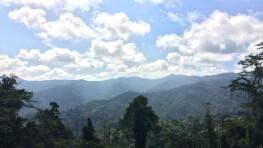 Ulu Sawatan Jungle Trekking