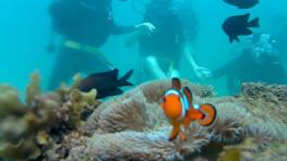 Pandan Pandan Island Discover Scuba Diving