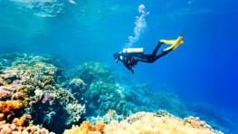 敦沙卡兰公园休闲潜水