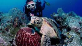 马布岛 + 卡帕莱岛 休闲深潜