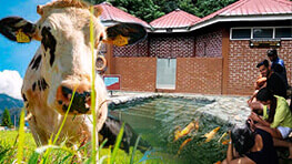 Poring Hot Spring + Fish Spa + Desa Farm