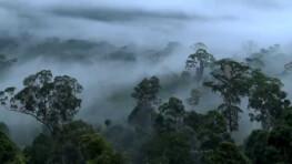 3D2N Maliau Basin Trekking Trip