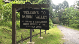 2D1N Danum Valley Field Centre Trekking Tour