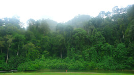 4D3N Danum Valley Field Centre Jungle Tour