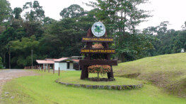 4D3N Danum Valley Treasure Trip