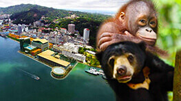 Orang Utan + Sun Bear + City Tour