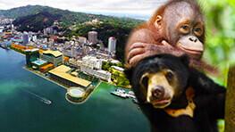 人猿 + 馬来熊 + 市區觀光