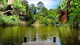 人猿 + 馬来熊 + 雨林探索中心