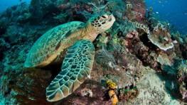 西巴丹岛潜水