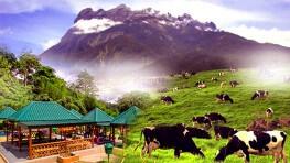 神山公园 + 波令温泉 + 奶牛牧场